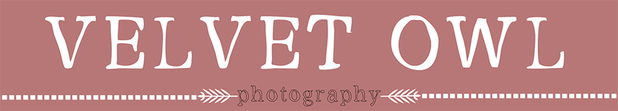 Velvet Owl Photography Blog logo